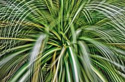 《Artificial view_botanical_7》