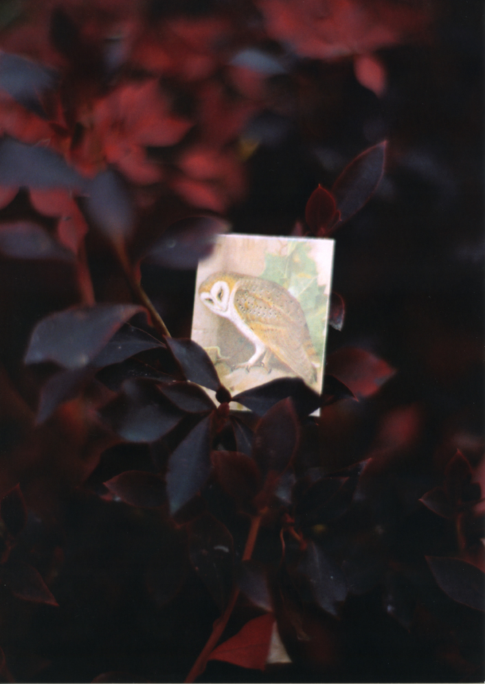 《BIRDS #35》