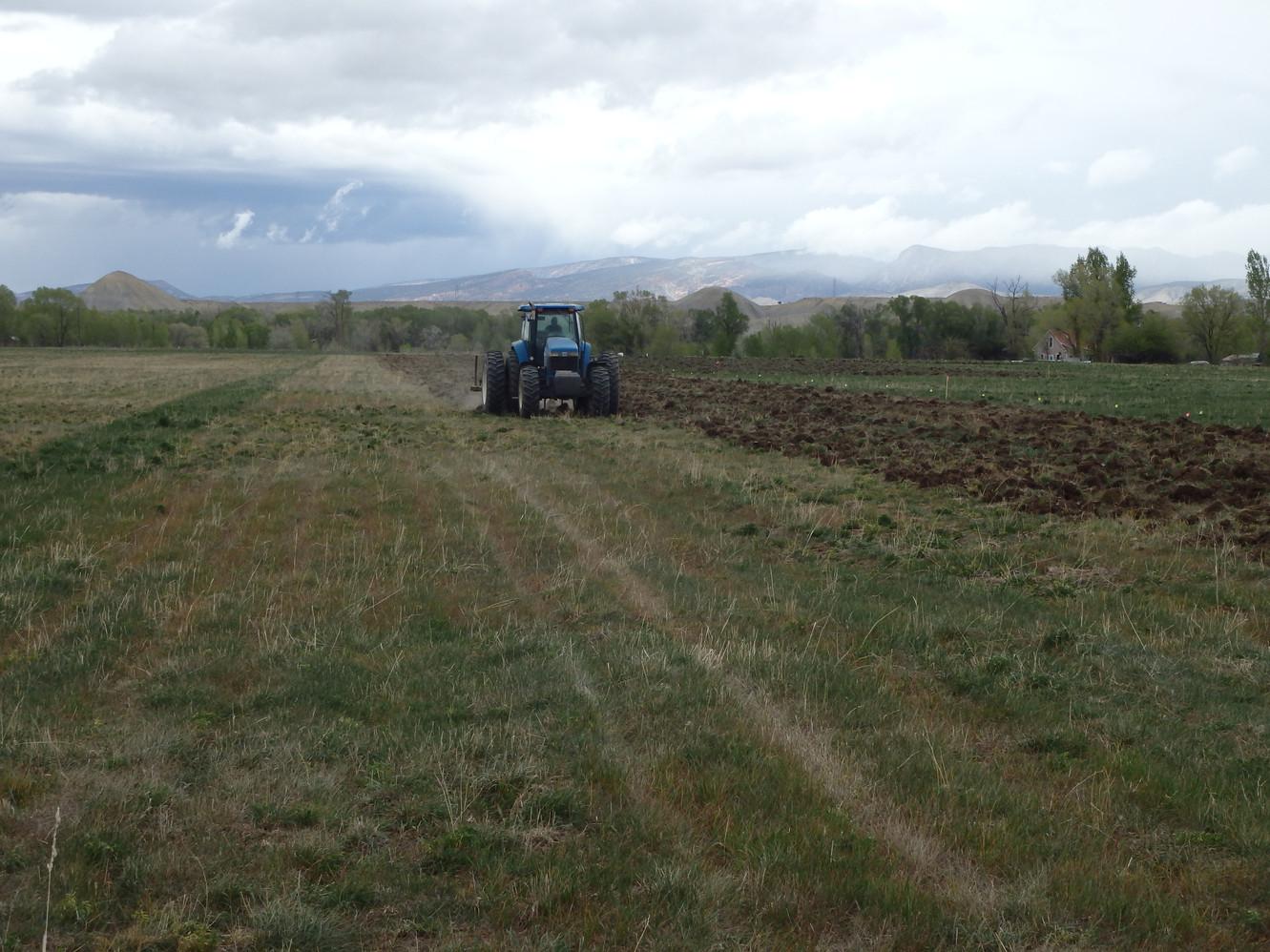 Found a 33 acre alfalfa field