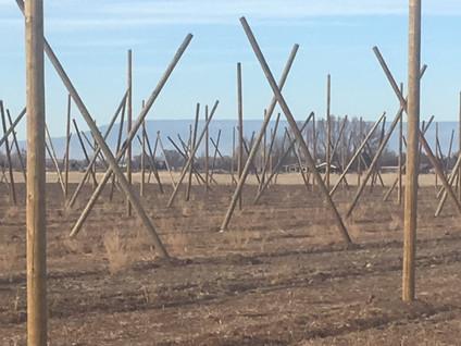Straighten the poles...