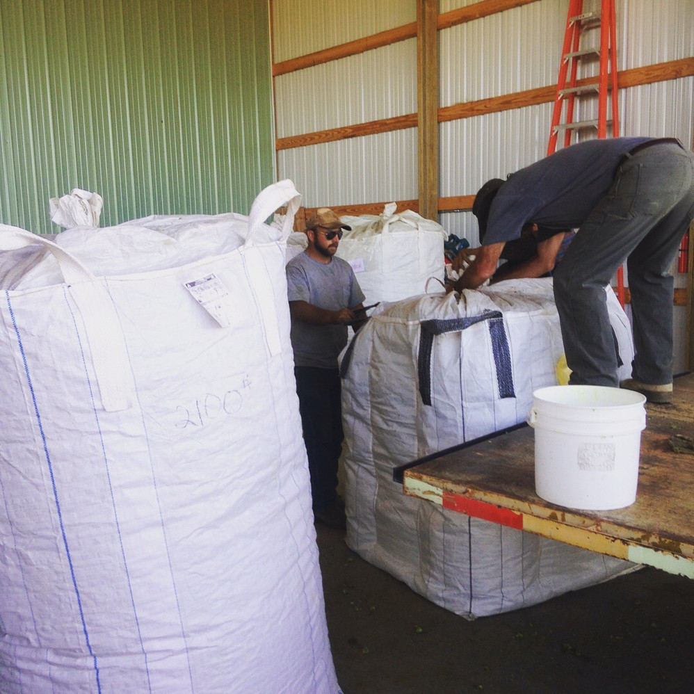 Loading the bags for cold storage