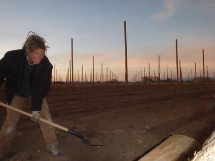 Digging....