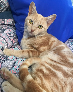Simon Cat