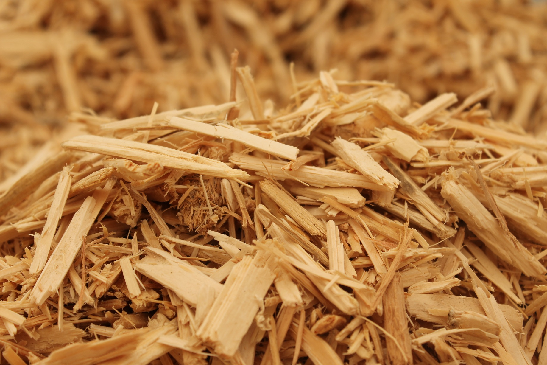 Waste Wood?