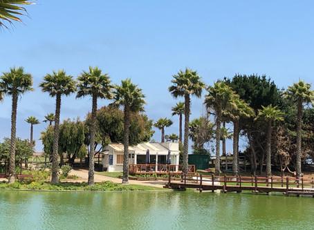 Laguna artificial en Club Santa María del Mar.