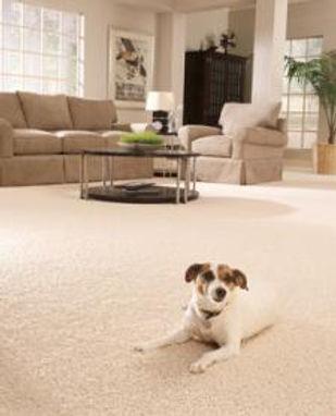 dog-on-carpet.jpg