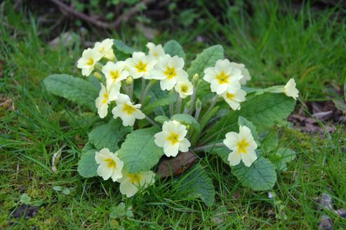 Wild Flower Identification