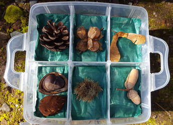 Seed Demonstration