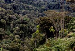 Rwanda 0692.jpg