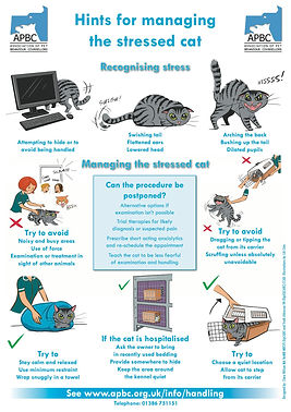 hints for managing stress in cats.jpg