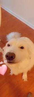 Burgess's Doggie.jpg