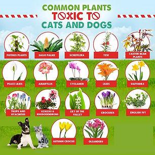 toxic plants.jpg