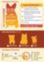 dog body temperature.jpg