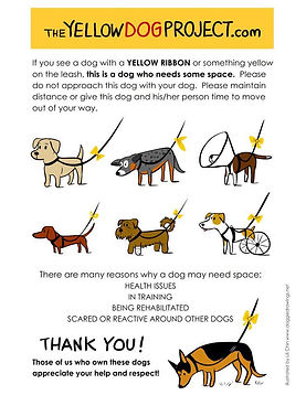 The Yellow Dog Project.jpg
