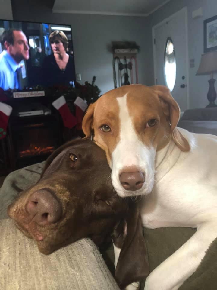 Sweitzer's Doggies