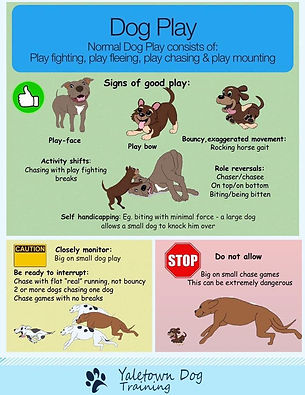 Dog Play.jpg