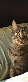 Bebop CH kitty