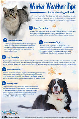 winter-weather-tips-for-pets_52cc0810e92