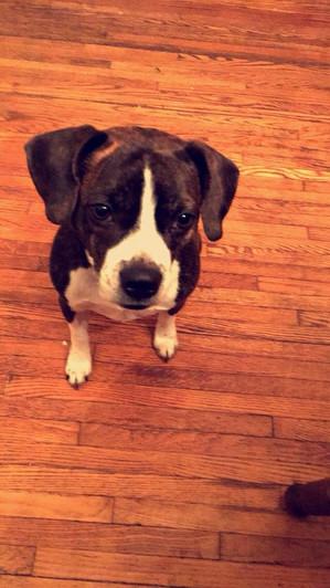 Baxter Cornelius