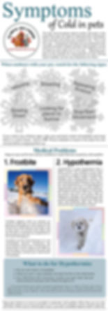 symptoms of colds in pets.jpg