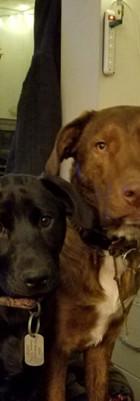 Basil and Saffie