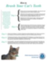 14528 Dental Handout Cat.jpg