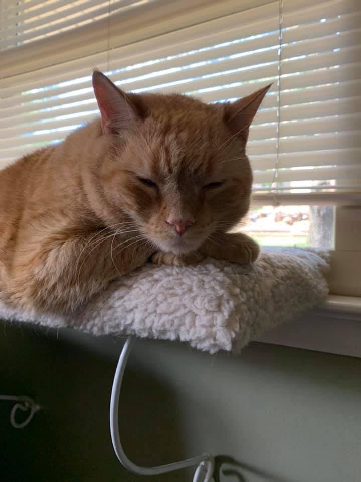 Delvin's cat