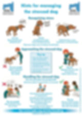 hints for managing stressed dog.jpg