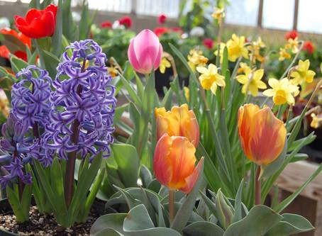 September - Time To Start Thinking Spring Flowers!