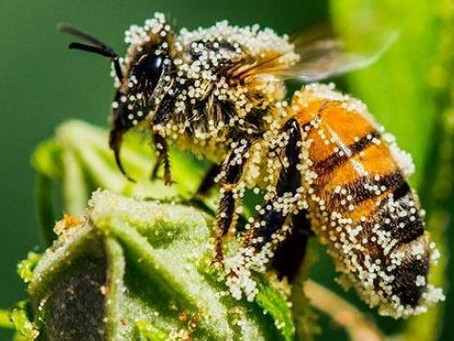 Help Save The Bees (while planning your garden)