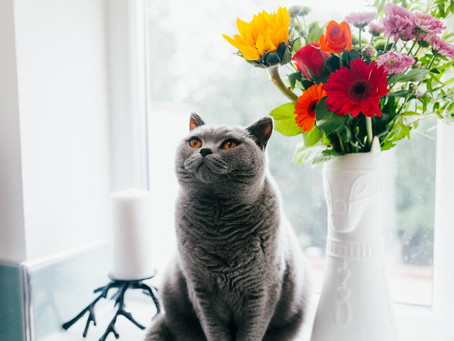 Keep Your Pets Safe from Plants!