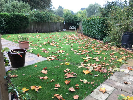 The Importance Of Keeping Leaves Off The Grass
