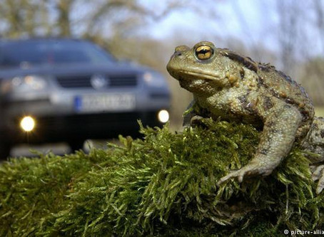 Why Did The Toad Cross The Road...?