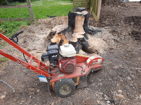 Why You Should Remove That Tree Stump