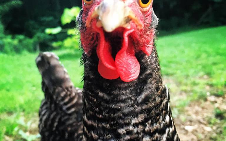 brooke's chicken.jpg
