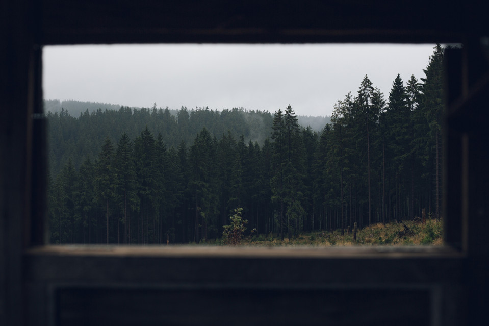 Deep Forests of Thuringia, Germany