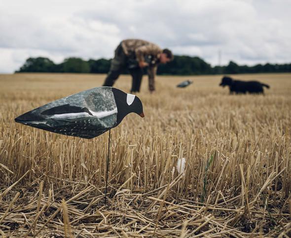 Pigeon Shooting - UK Shoot Warehouse