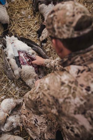 Inland Goose Shooting - Prym1 Camo