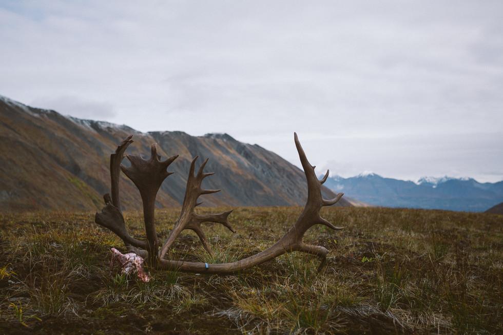 Caribou Hunting - Alaska