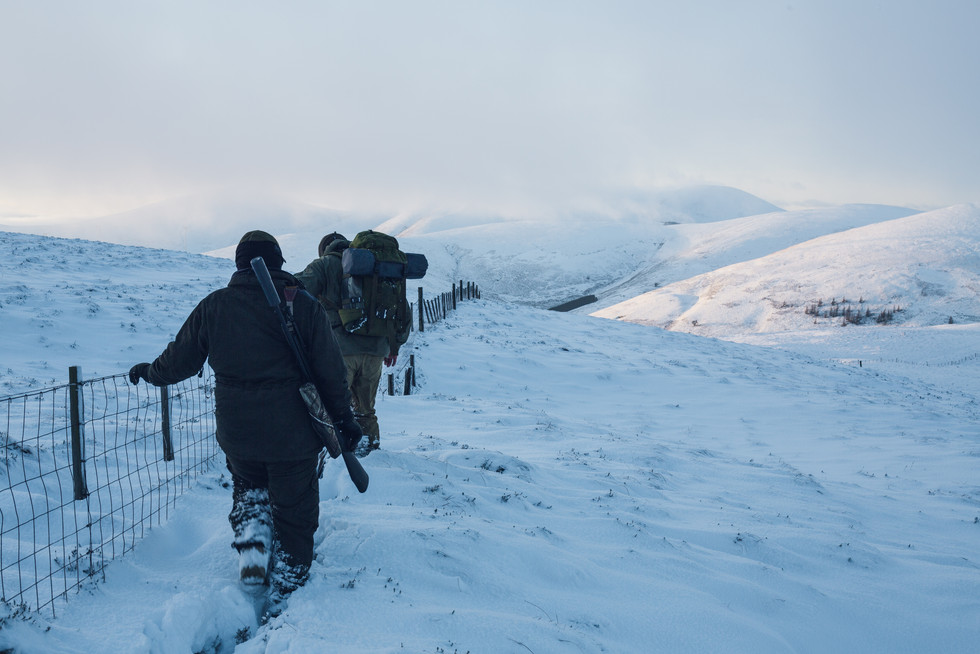 Sika Stalking - Scotland