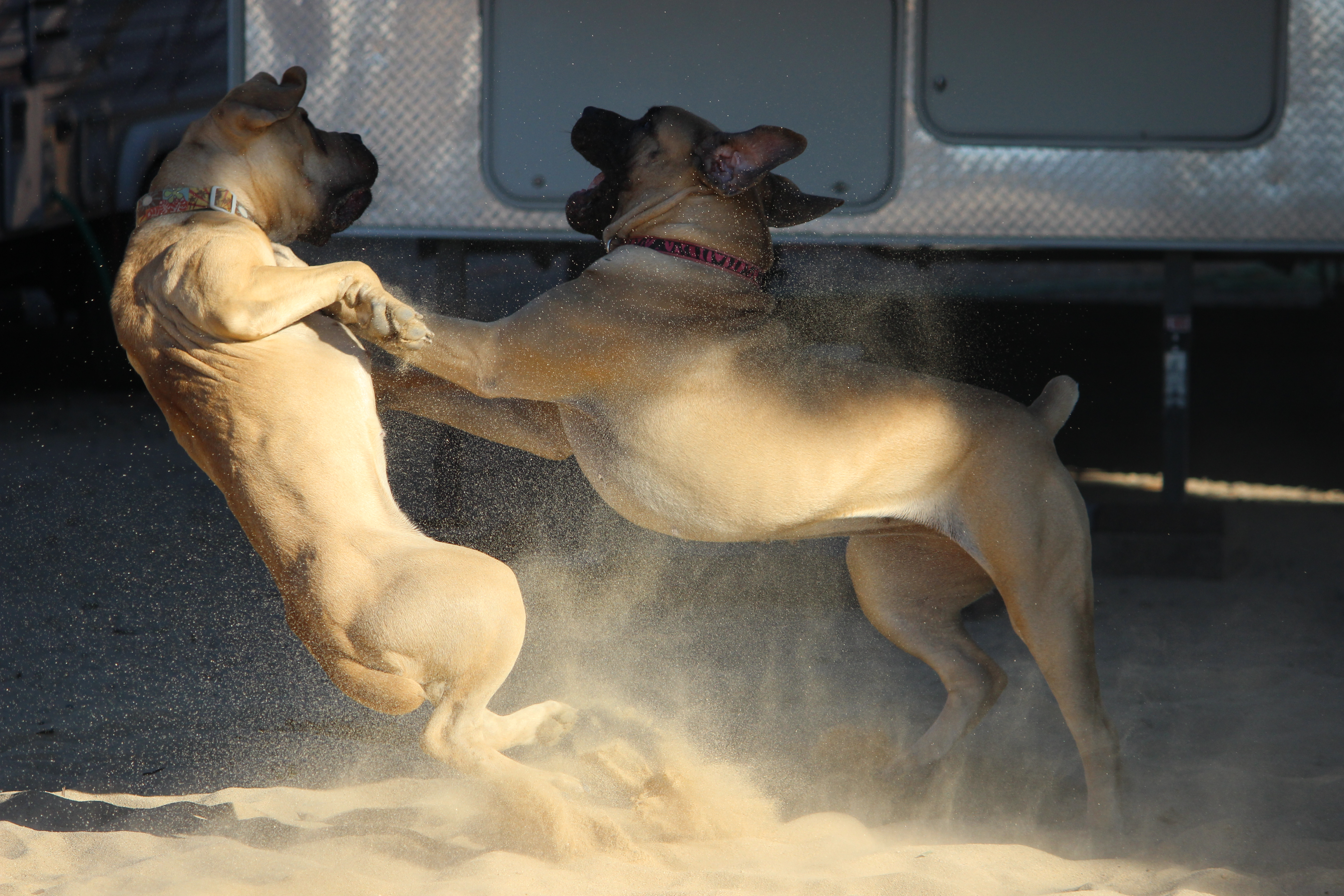 Sage and Luna playing