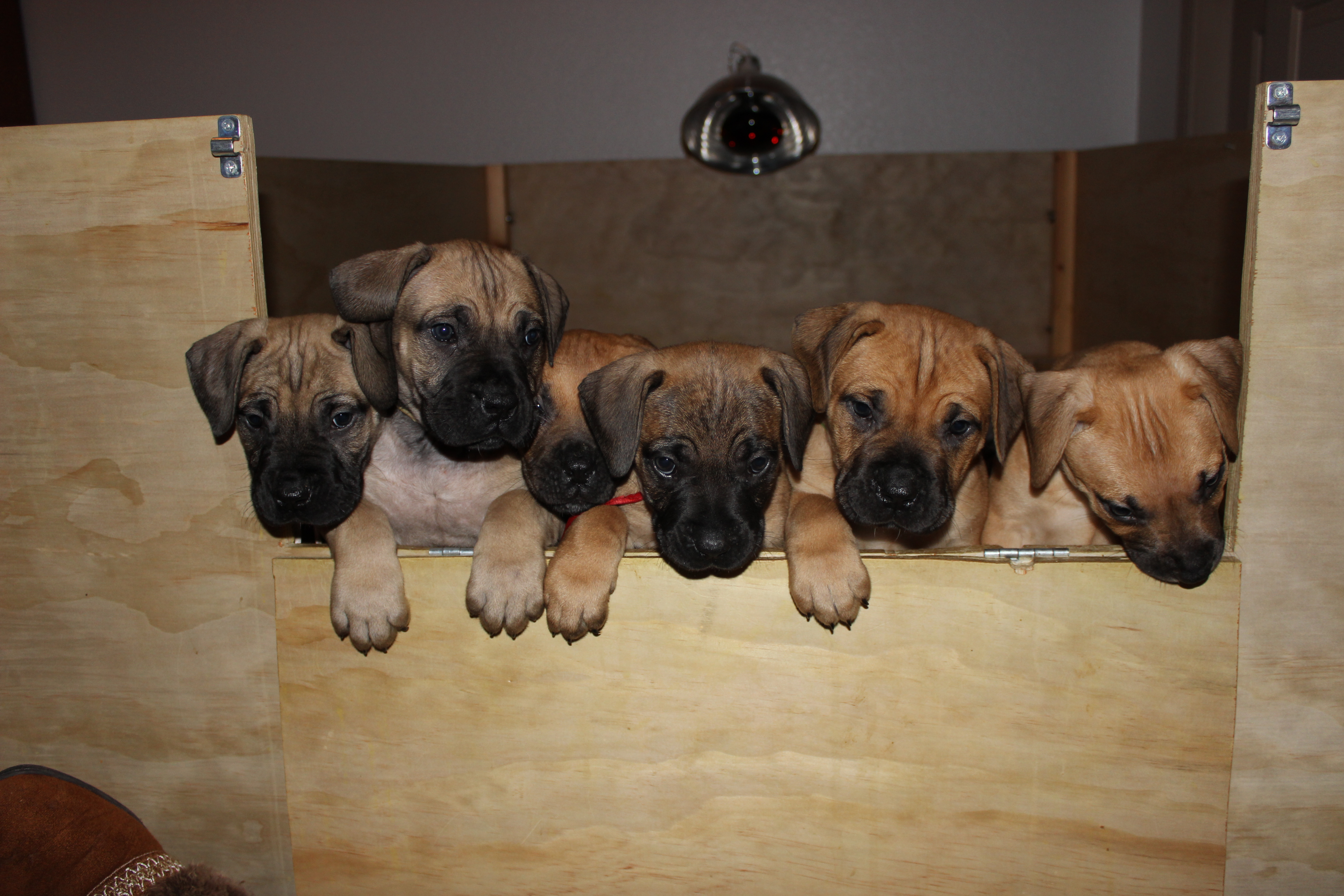 Girl puppies