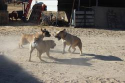 Faith, Sage and Luna playing