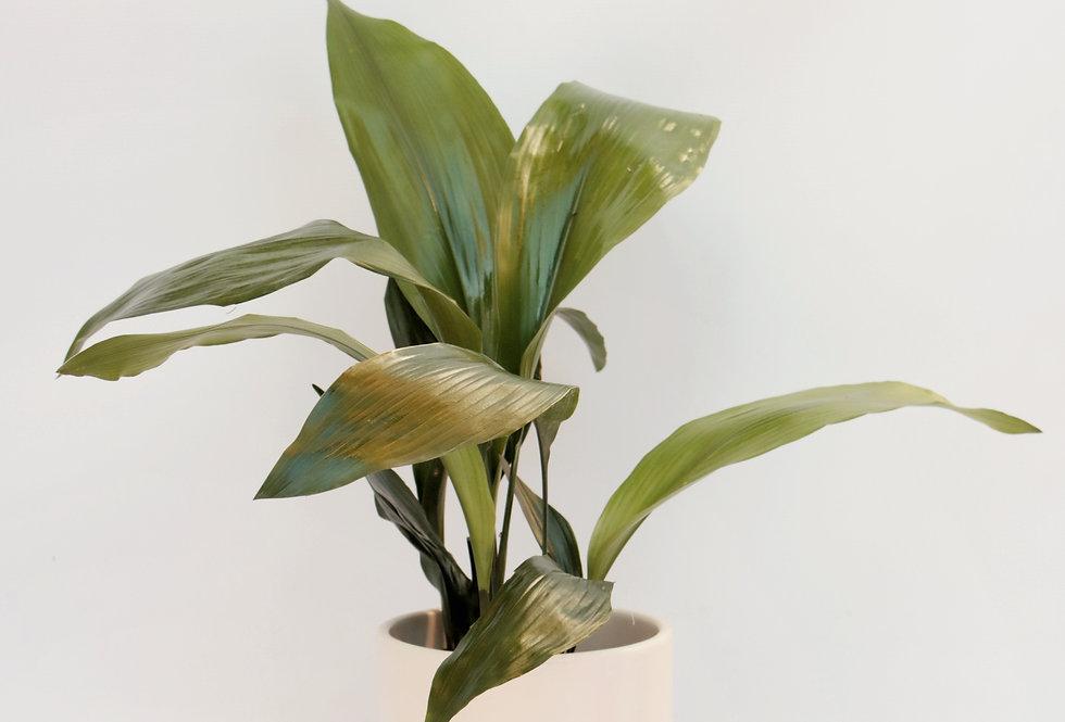 planta resistente con maceta