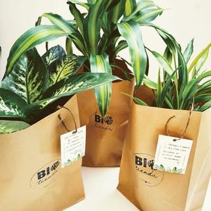 Que estamos regalando cuando regalamos una planta?