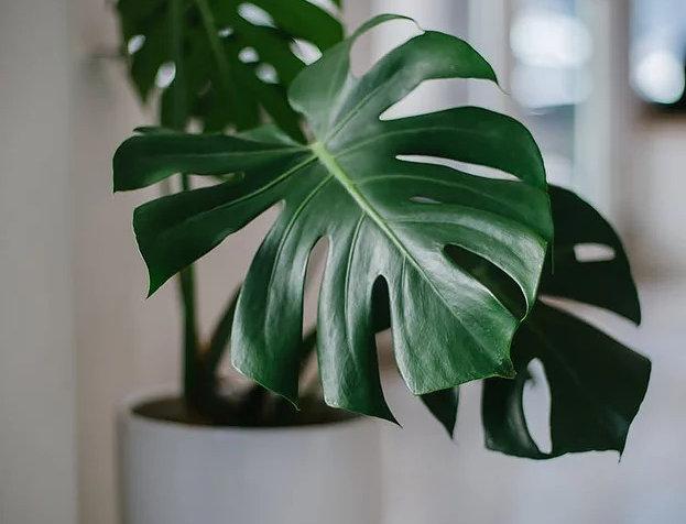 envio de plantas a domicilio biotienda plantas