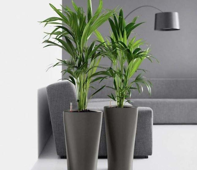 palmeras feng shui