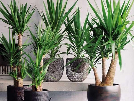 Las mejores plantas para interior