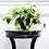 planta colgante para oficina vivero online