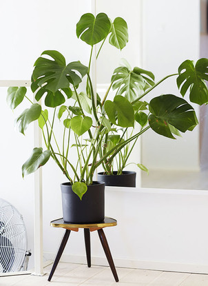 Plantas de interior que necesitan poca luz